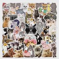 50PCSใหม่Kawaii Catสติ๊กเกอร์รูปลอกสำหรับสาวน่ารักการ์ตูนสัตว์สติกเกอร์DIYกระเป๋าเดินทางเครื่องเข...