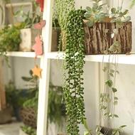 Ivy League พืชตกแต่ง2Pcs ไม้อวบน้ำประดิษฐ์ต้นไม้แขวนปลอม String ไข่มุกตกแต่งบ้าน Ivy Succulent พืชไม้อวบน้ำประดิษฐ์