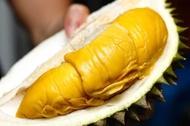 Anak Pokok Durian Musang King 100% Hybrid