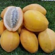 鮮採香蜜百香果種子/金蜜百香果種子 10粒100元