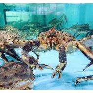 【一井水產】 日本空運 蟹中之王 活帝王蟹 活體鱈場蟹 保證新鮮 秤重計價