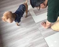dHSHOP | 柔和灰 網路搜尋第一 寵物 韓國DIY歐巴地板