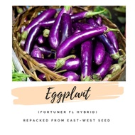 Eggplant Seeds (Fortuner F1Hybrid) East-West Seed