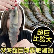 【海肉管家】巨無霸深海鮮美肥豬蝦(1支/每支約350~400g±10%)
