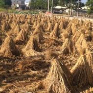 乾稻草含葉,如圖拆開直接裝箱/1箱。 免運費、無法超取