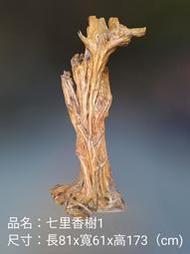 七里香樹1