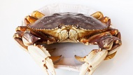 Live Dungeness Crab (800g up)