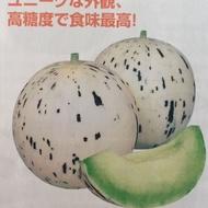 『蔬菜種子』月露蜜瓜/大賣町洋香瓜