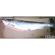 ★築地東京★【冷凍鮭魚整尾帶頭(去肚)】6~7KG/尾
