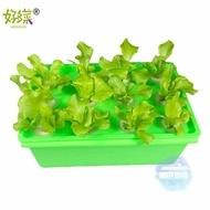 無土栽培設備 小型箱式種植箱 無土栽培水培 水耕 家庭種菜機設備 綠植T