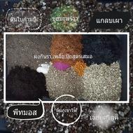 ดินปลูกกระบองเพชร ดินปลูกแคคตัสและไม้อวบน้ำ