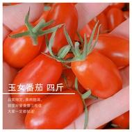 【結善園小番茄】玉女番茄 四斤