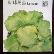 農用711 結球萵苣 美生菜 種子