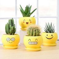 succulent pot succulent soil succulent planter seeds succulent plant plant seeds ❖Cactus potted indoor green plants orna