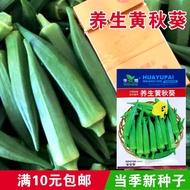 養生黃秋葵種子 菜園秋葵種子 紅秋葵種子 綠秋葵菜 蔬菜種子四季