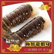 頂級生凍(大龍蝦身/龍蝦尾) 220g±5%/單尾 年菜 野生 龍蝦清肉 極鮮凍 加勒比海龍蝦身 龍蝦