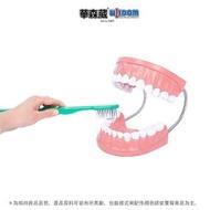 【華森葳兒童教玩具】科學教具系列-超大牙齒模型(N6-TH001)