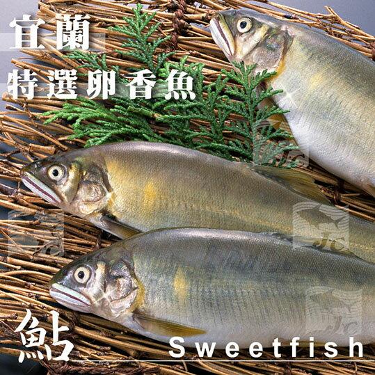 特選宜蘭帶卵大母香魚(6尾) 1kg±10%/盒#新鮮#爆卵#母香魚#乾煎#鹽烤#特選純淨水域出產