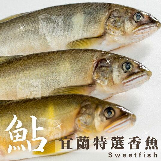 特選宜蘭公香魚(10尾) 1kg±10%/盒#新鮮#公香魚#乾煎#鹽烤#特選純淨水域出產