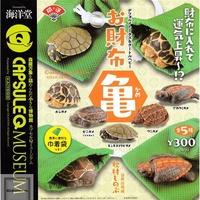 【正版扭蛋】正版現貨 海洋堂 招財布袋龜 鱷龜星龜模型 動物扭蛋D08