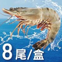 活凍特級草蝦 8尾 400g±10%/盒#現撈A+等級#蝦#草蝦#大草蝦#新鮮#野生蝦