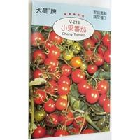 [蔬果種子]小番茄種子 紅色小番茄 橢圓型小果 一包可育5株