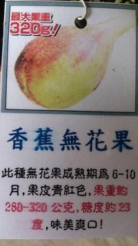 水果苗-果苗-果樹苗- [香蕉無花果 ]-5-6吋盆-花花世界玫瑰園-SG285