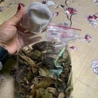 自家種植 刺果番荔枝/圓滑番荔枝/菲律賓小葉紫檀 茶包