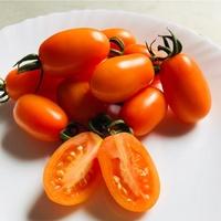 美濃阿義哥橙蜜香小番茄