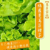 【萵苣家族】綠蘿蔓萵苣種子(蘿美生菜)Romaine lettuce seed