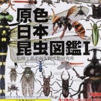 Yujin 原色日本昆蟲圖鑑 I 全12種(11+1隱藏) 原色 日本 昆虫 図鑑 大全套