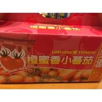 美濃 橙蜜香 小番茄