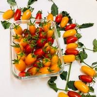 自產自銷小番茄