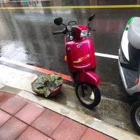 中華電動車(免駕照)