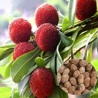30pcs Arbutus Unedo Strawberry Tree Delicious Chinese Fruit Seeds Garden Orchard Supplies