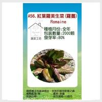【蔬菜工坊】A56.紅葉羅美生菜(羅蔓)種子