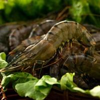 ***童童水產生鮮***馬來西亞養殖大草蝦(黑虎蝦),每盒600公克,約26~28尾