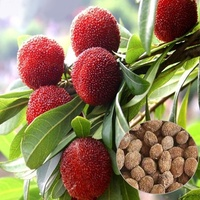 10 Particles / Bag Arbutus Unedo Strawberry Tree Delicious Chinese Fruit Seeds For Healthy And Home