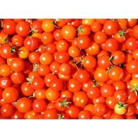 紅櫻桃小番茄 種子