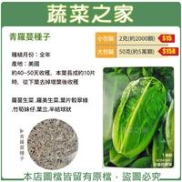 【蔬菜之家】A85.青羅蔓種子(青羅美生菜)(共2種包裝)