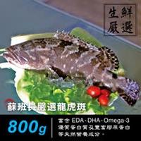 蘇班長安心石斑 龍虎斑鮮魚條凍800g 3入組