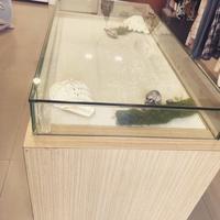 二手珠寶展示櫃「品相良好」