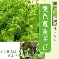 【種菜小學堂】雙色蘿蔓萵苣(美生菜)混合種子