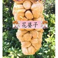 白蜜榴槤蜜/抗寒品種/水果苗/榴槤蜜品種/嫁接苗