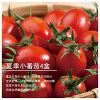 【鴻圖農場】 夏季小番茄4盒