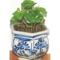 【阿拉比卡品種咖啡種子】可種小品盆栽.樹苗~綠化家園***一份300顆249元
