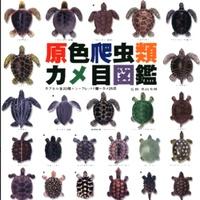 YUJIN 原色爬蟲類圖鑑  烏龜 巴西龜 鱷龜 擬真