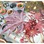 元茂園藝中壢園區-新貨上架 紅楓-嫁接紅猩猩 盆養兩年 實品拍攝