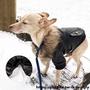 🐺【寵物之家】特價促銷🐱狗狗冬季毛領帥氣保暖皮衣 冬季保暖小狗犬衣服潮