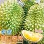 【果之蔬】嚴選泰國進口榴槤(3~4顆入/約12Kg±10%)